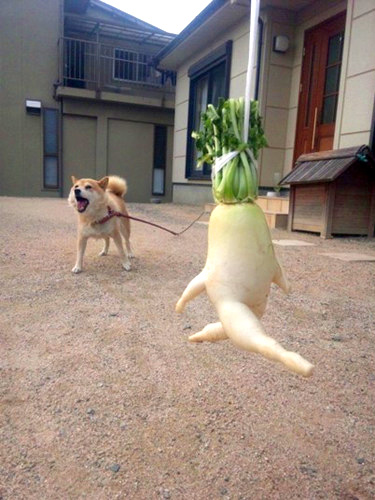 radish-which-escapes