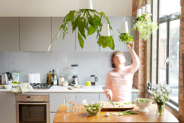 キッチン菜園として使っている画像
