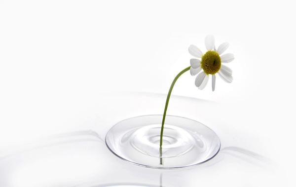 水に浮く一輪挿し「oodesign Floating Vase RIPPLE(オーデザイン フローティングベース リップル)」の画像