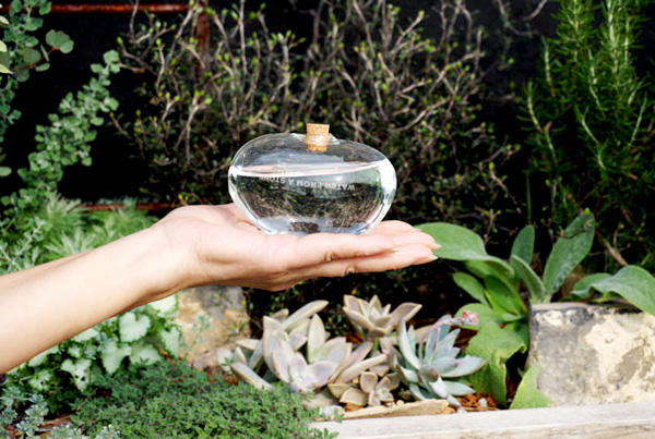 水やり器を女性の手の平に乗せている画像