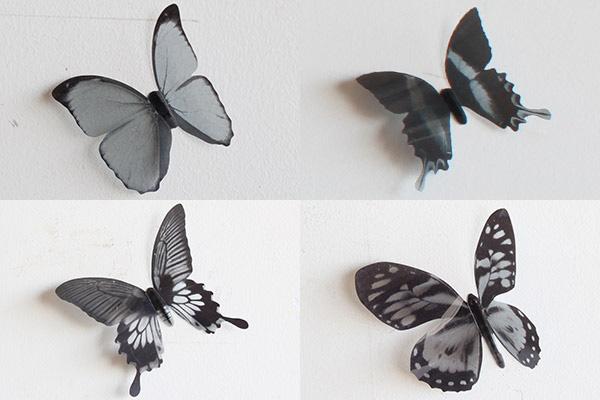 3種類の蝶を並べた画像
