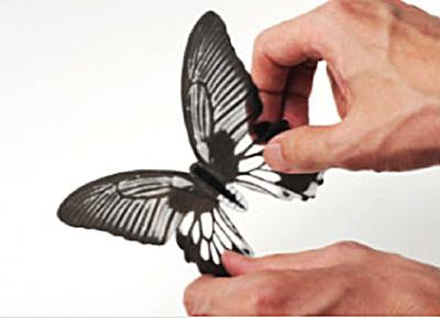 羽の開き具合を調整している画像