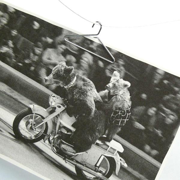 クマの親子がバイクに乗っている写真をクリップで挟んでいる画像