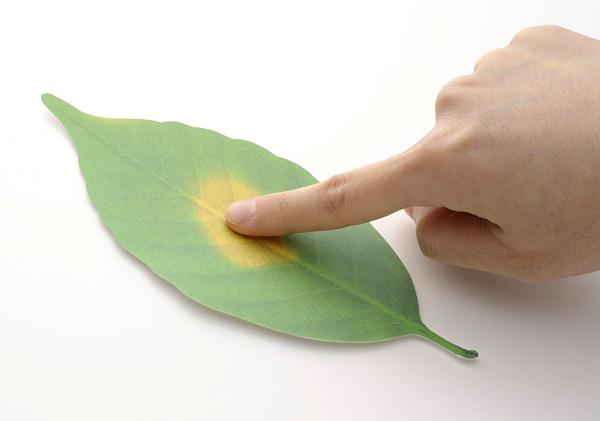 葉っぱに指をつけて色が変わっている画像