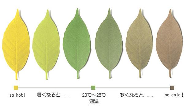 温度によって色が変化した葉っぱを並べた画像