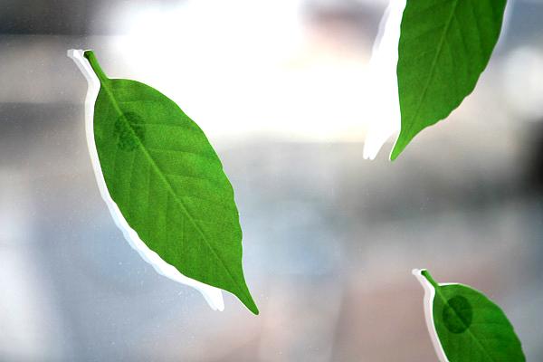 葉っぱの温度計を窓に貼り付けた画像