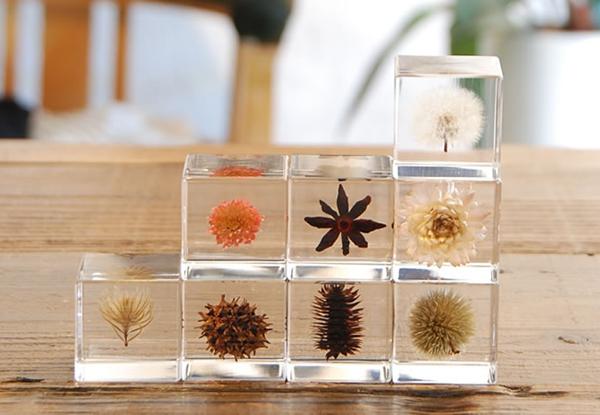 植物のアート標本「sola cube」の画像