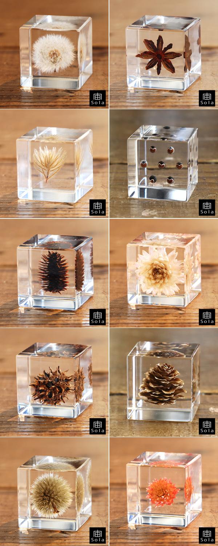10種類のsola cubeを並べた画像