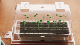 室内用の野菜栽培キット「hatake」の画像