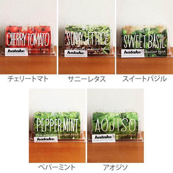5種類のhatakeを並べた画像
