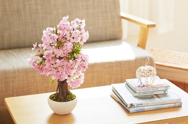 盆栽の花が咲いた画像