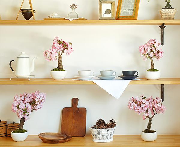 桜の盆栽を棚に飾った画像